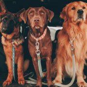 Ο οδηγός σου για να κρατήσεις τον σκύλο σου υγιή και ασφαλή τις ζεστές μέρες του καλοκαιριού