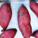 Είναι οι Ιαπωνικές πατάτες το νέο ελιξίριο νεότητας;
