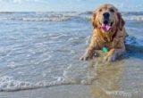 Τι πρέπει να προσέξεις όταν είσαι με τον σκύλο σου στην παραλία