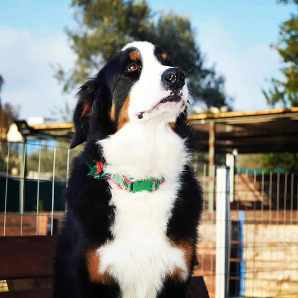 Σκύλος- θεραπευτής: Ο ήρωας με τα τέσσερα πόδια