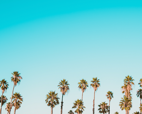 summer-palm-trees