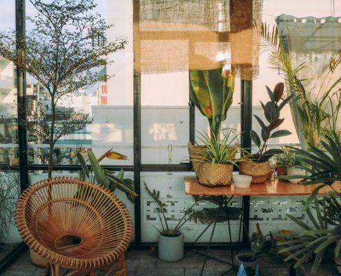 Τα 6 πιο συνηθισμένα λάθη που κάνεις με τα φυτά εσωτερικού χώρου
