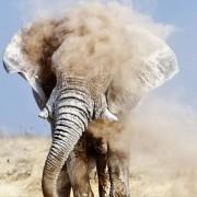 7 πράγματα που πρέπει να μάθεις πριν ταξιδέψεις στη Νότια Αφρική