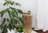 To DIY τραπεζάκι από κορμό δέντρου που χρειάζεσαι ως side table