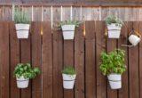 11 λαχανικά και φρούτα που μπορείς να καλλιεργήσεις στο σπίτι σου
