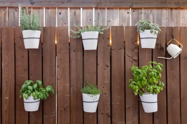 11 τροφές που μπορείς να καλλιεργήσεις στο σπίτι σου ακόμα και αυτή τη στιγμή