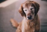 Οι λόγοι που τα αδέσποτα γίνονται καλύτερα pets