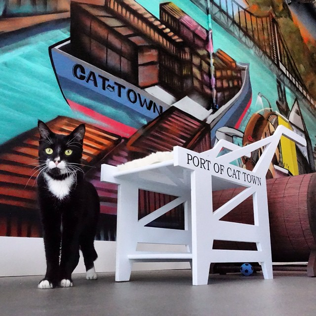 Τα 5 πιο cool animal cafes του κόσμου