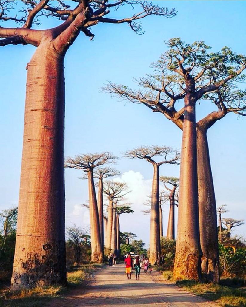 photo: Africalinks - Tumblr