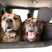 Γιατί δεν είναι ΟΚ το να οδηγείς με τον σκύλο σου στη θέση του συνοδηγού